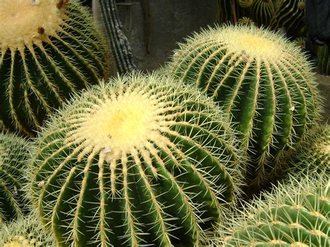 lovely hd cactus wallpapers