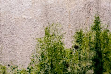 Grüner Schimmel An Der Wand » Erkennen Und Behandeln