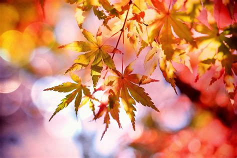 fall photos free stock photo of autumn autumn colours autumn leaves