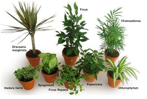 maison les plantes d 233 polluantes vous connaissez