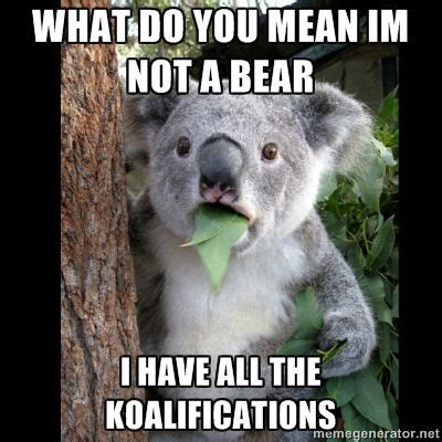Bear Stuff Meme - 17 best images about hahaha moments on pinterest cats catholic and the sacrament