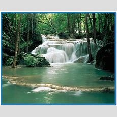 3d Jungle Waterfall Live Wallpaper For Pc