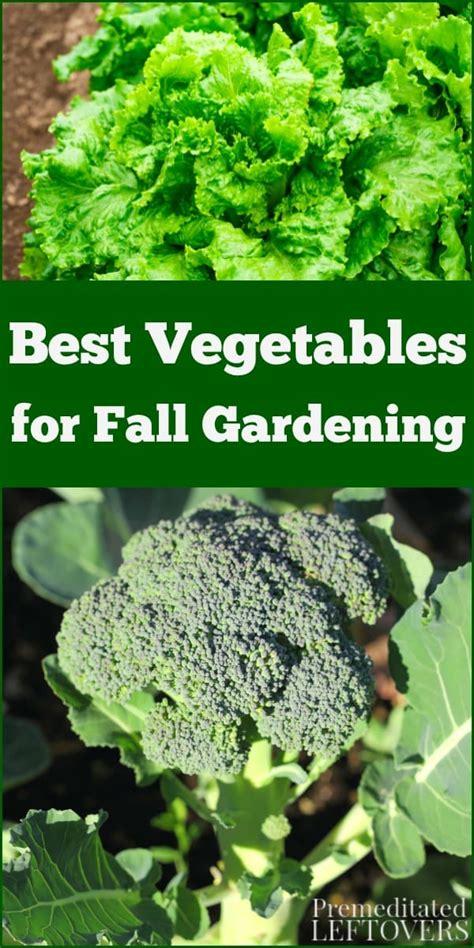 vegetables  fall gardening