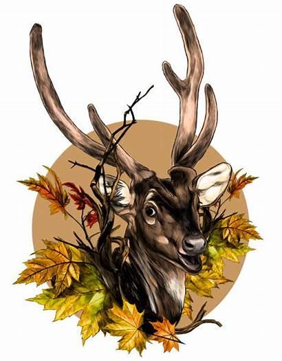 Doe Deer Fallow Drawing Head Sketch Illustrations