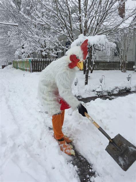 east nashville thunder snow chicken bored panda