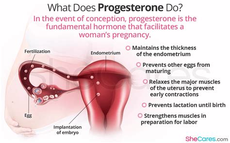 What Does Progesterone Do?  Shecares. Comic Book Resume. Valet Attendant Resume. It Analyst Resume Examples. Optimal Resume Bowdoin. What Is A Job Resume Supposed To Look Like. Sample High School Resume College Application. Professional Resume Format For Experienced. Cocktail Waitress Resume Samples