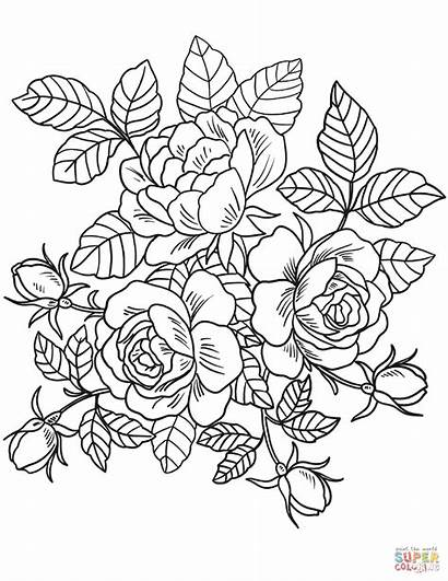 Coloring Pages Roses Flowers Printable Paper Drawing