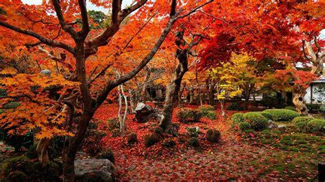 Fall Desktop Backgrounds Hd by Autumn Wallpapers 1920x1080 Wallpaper Cave