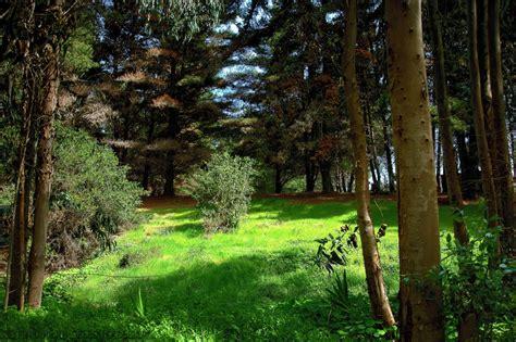 Imagenes de un bosque costero - Las Cruces (Chile) | Flickr