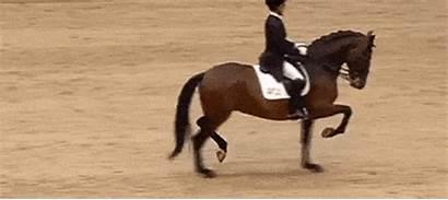 Horse Trotting Lmao Yo Why Gfycat Hop