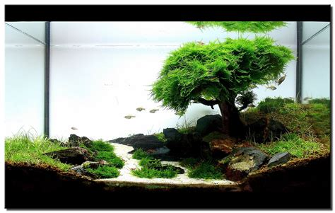 Japanese Aquascape by Sometimes You Just To Find A Hobby Aquascaping The