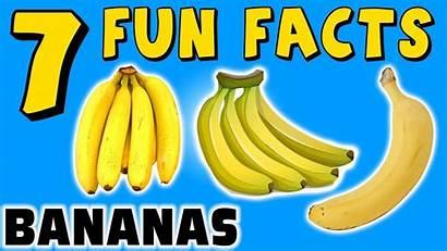 Banana Facts Bananas Fun Funny Fruit Yellow