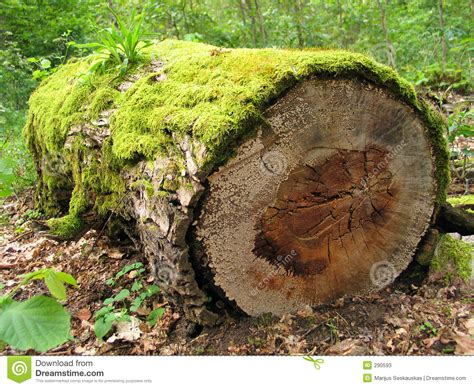Mossy Log Stock Image. Image Of Ancient, Mossiness