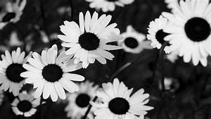 Black And White Flowers Tumblr Black And White Flowers ...