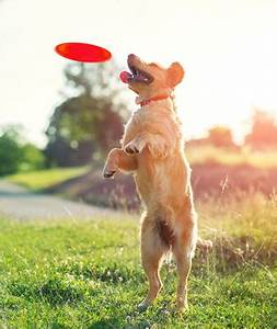 safe and fun dog daycare in victoria tx pet resort on main With red dog daycare