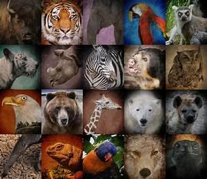 Endangered Species - KIDS DISCOVER