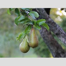 How To Get The Best From Your Fruit Plants And Trees