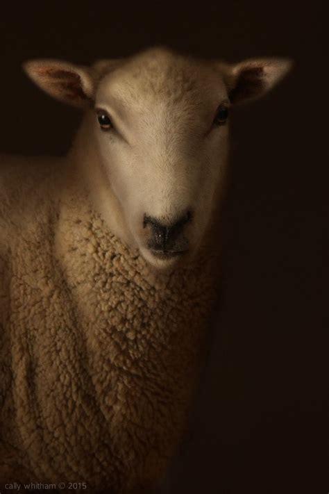 cally whitham animal portraits fine art photography