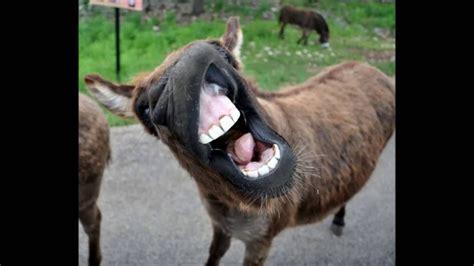 funny donkey sounds hd youtube