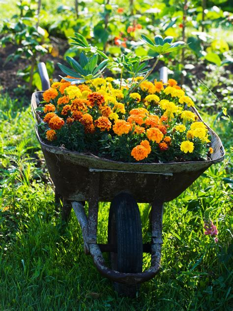 different plants for landscaping landscaping 101 different types of plants hgtv