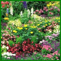 Gartenschlumpf  Schmetterlingsgarten, Eine Oase Für