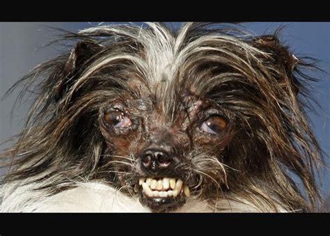 peanut el perro mas feo del mundo mariela tv