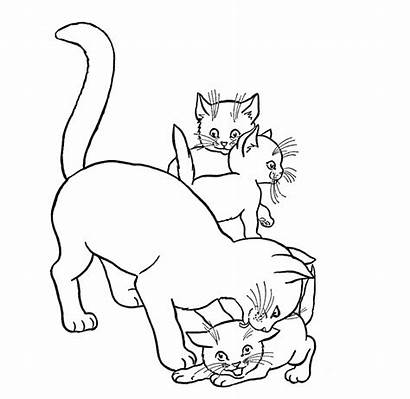 Coloring Pages Cats Animal Cat