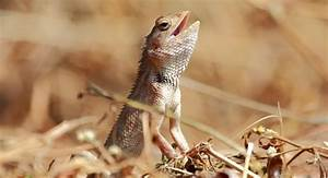 Reptiles | about animals