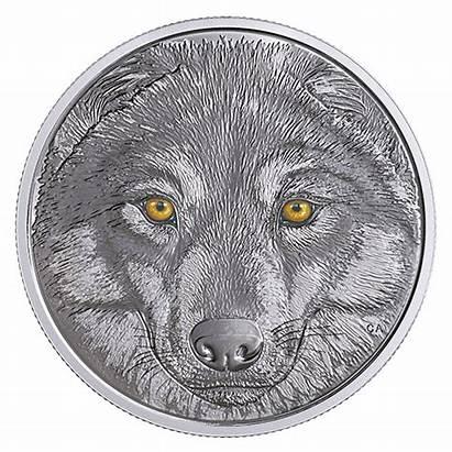 Wolf Coin Eyes Canadian Silver Dark Glow