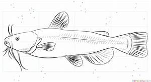 How To Draw A Catfish