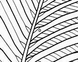 Coloring Sunrise Embroidery Pattern Digital Palm Adult Tree Printable Ocean Getcolorings Scene Coastal Getdrawings Sanderlings Sand sketch template