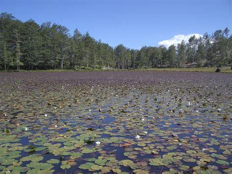 File:Lura Liqeni i Lulëve.JPG - Wikimedia Commons