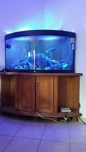 Komplett Aquarium Kaufen : eck aquarium kaufen eck aquarium gebraucht ~ Eleganceandgraceweddings.com Haus und Dekorationen