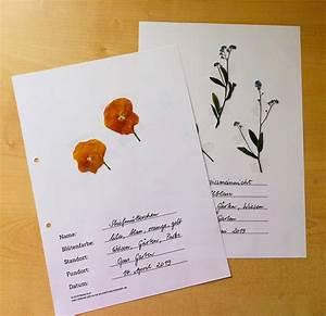 Was Ist Ein Herbarium : wiese herbarium gestalten grundschule und basteln der blog von beate kurt ~ A.2002-acura-tl-radio.info Haus und Dekorationen