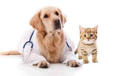 3 Reasons For Getting Pet Insurance  Nuzzle  Your Gps