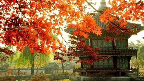 wide korean aesthetic wallpapers  wallpaperdog