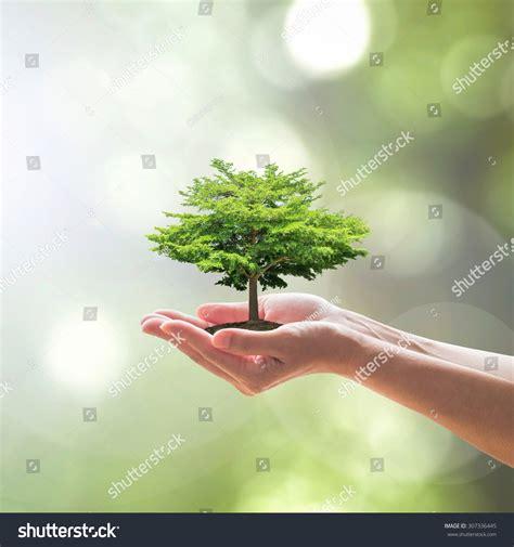 Tree Planting On Female Human Hands On Soil W Blur