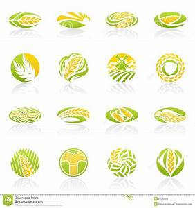 Wheat And Rye. Vector Logo Template Set. Stock Vector ...