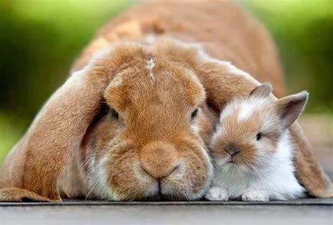 kaninchend jappyde kaninchen hase kaninchen und