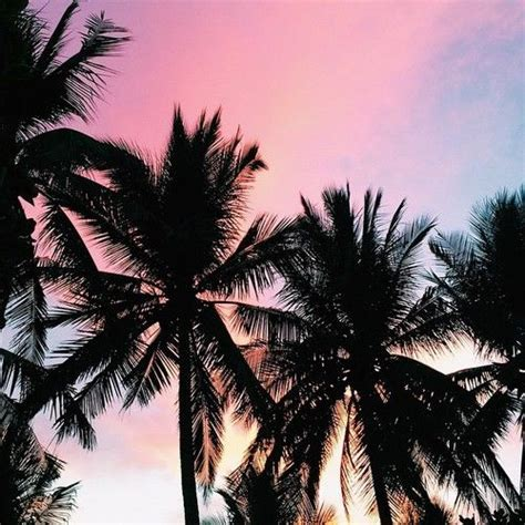 Beautiful Sunset Over Palm Trees Pictures, Photos, and