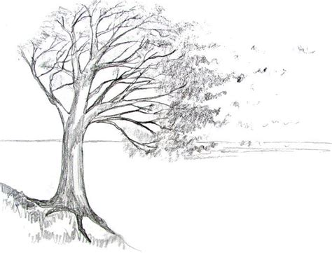 draw  tree   drawing pencil drawings