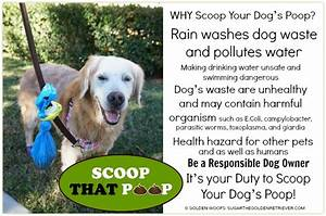 scoop dogs poop