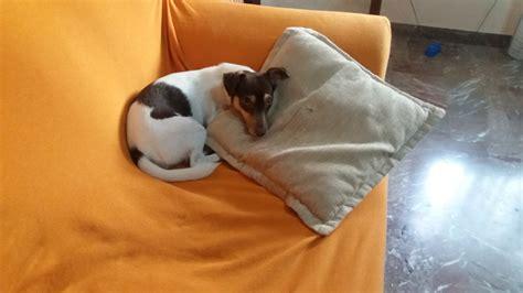sul divano sul divano petpassion