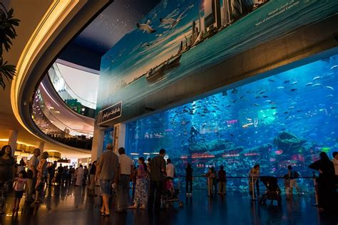 dubai mall aquarium retail dubai mall
