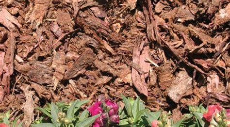 Mulch-types Of Mulch