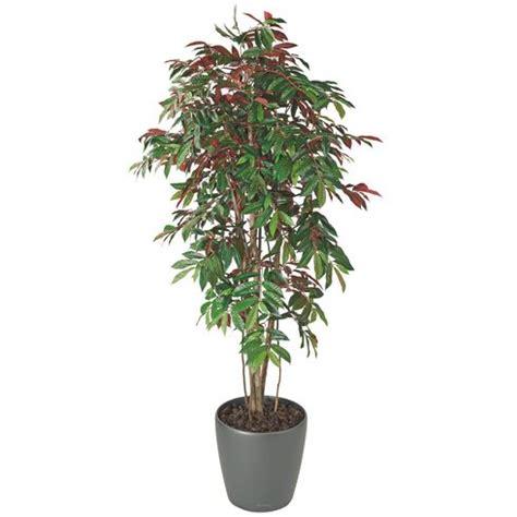 plante artificielle d int 233 rieur capensia pot maxiburo