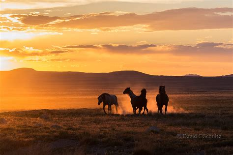 horse photography gallery