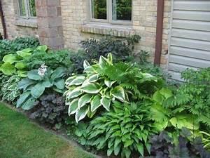 Schattenpflanzen Garten Winterhart : schattenspendende pflanzen bildschirme and terrassen on ~ Lizthompson.info Haus und Dekorationen
