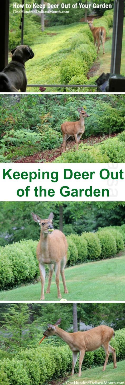 how to keep deer out of your garden how to keep deer out of your garden stop feeding them