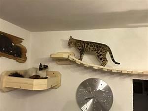 Verkleidung Für Katzen : h ngebr cke catwalk f r katzen wandkratzbaum massiv stabile wandhalterung f r katzen ~ Frokenaadalensverden.com Haus und Dekorationen